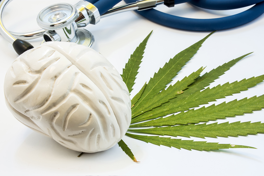 a mold of the brain sitting on top of a hemp leaf, with a stethoscope next to it.